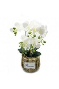 Aranjament floral Orchid Flower
